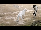 funny_cats_fight